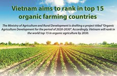 Vietnam aims to rank in top 15 organic farming countries