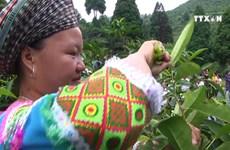 Ancient tea tree in Yen Bai honoured
