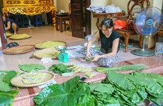 Vong village bustles in young green rice season