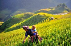 CNBC: Mu Cang Chai should top 2020 travel list