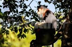 'Queen of primates' through the lens