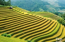 Must-visit spots in Mu Cang Chai
