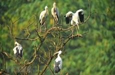 Thung Nham Bird Park in Ninh Binh province