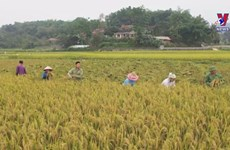 Investment needed for agriculture, rural area building