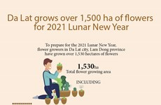 Da Lat grows over 1,500 ha of flowers for 2021 Lunar New Year