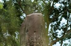 Mysterious stone pillars of Dam pagoda