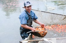 Carp village prepares for Kitchen Gods' Day