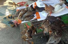 Wildlife conservation organisations call for end to wild birds trade