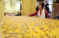 Great effort to preserve traditional mulberry silk business
