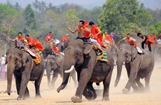 A glimpse into the one-of-a-kind elephant racing festival in Vietnam