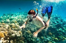 Coral diving in Cu Lao Cham Island: unforgettable experience