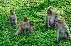 Monkey Island - An interesting destination in the city of Nha Trang