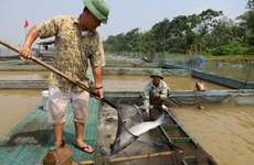 How a farmer get rich on Kinh Thay river