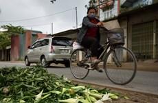 Hanoi: Farmers in Tay Tuu flower village face hardship in COVID-19 pandemic