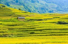 Admiring terraced rice fields in Y Ty