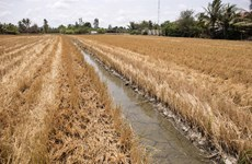 Mekong Delta locals respond to drought and saltwater intrusion