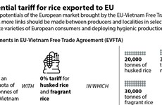 Preferential tariff for rice exported to EU