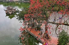 Red silk-cotton flowers in full bloom at Thay pagoda