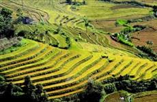 Golden terraces of Ta Leng