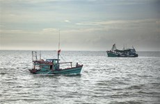 Kien Giang attempts to fight illegal fishing