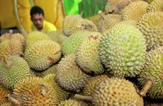 Vietnamese durian given push in Australia