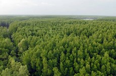 Efforts made to preserve Can Gio Mangrove Biosphere Reserve