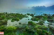 Beautiful seaweed field in Ninh Thuan
