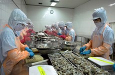 Vietnamese shrimp sells like hot cakes in US in H1