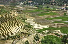 Mu Cang Chai in rice-growing season: A mural to the Northwest