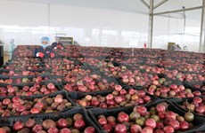 EVFTA gives fruit exports a boost