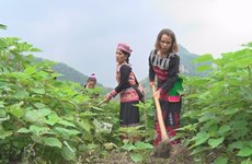 Programmes encouraging local women to remain in Lao Cai