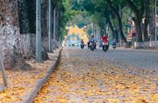 """Dreamy Hanoi in falling """"Sau"""" leaf season"""
