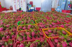 Fruit exports to the US thrive