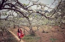 Thai ethnic girls enjoy spring atmosphere in Moc Chau plateau