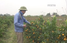 Unfavourable weather worries flower growers