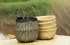 Phu My grey sedge weaving craft needs preserving