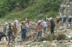 Youth join hands to clean up Son Tra peninsula