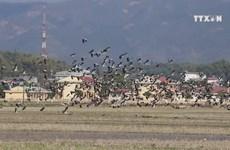 Presence of rare stork in Dien Bien