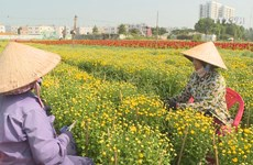 Ho Chi Minh City flower village busy ahead of Tet