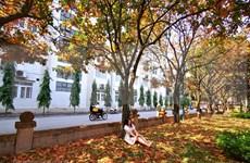 Golden leaves make university instagrammable venue
