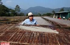 Phia Den mountain: Hometown of glass noodles