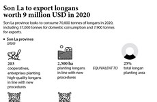Son La to export longans worth 9 million USD in 2020
