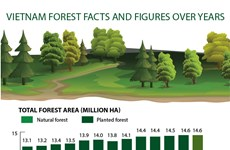 Vietnam forest facts and figures over years