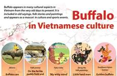 Buffalo in Vietnamese culture