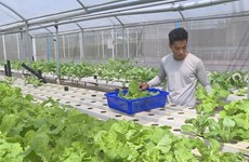 Hi-tech agriculture proves effective in Dong Nai