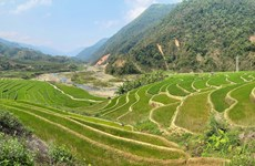 Beauty of young rice terraces in Lai Chau