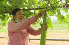Da Nang boosts production of clean vegetables based on high tech