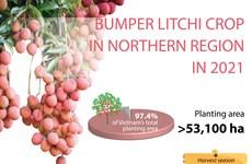 Bumper litchi crop in northern region in 2021