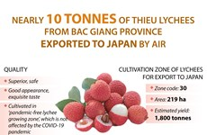 Bac Giang exports nearly 10 tonnes of Thieu lychees to Japan