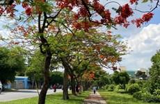 Flamboyant flowers showcase beauty in summer